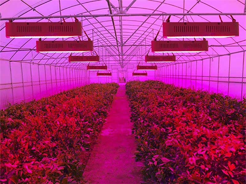 mcpcb application led grow lighting